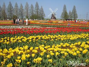 あけぼの山農業公園1 2IMG_9444.JPG
