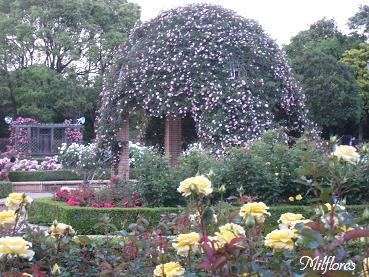 柏の葉公園IMG_9519.JPG