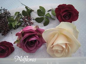 MilfloresIMG_0521.JPG