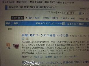 MilfloresIMG_0530.JPG